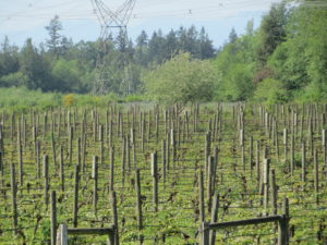 Fraser Valley Wine Tour